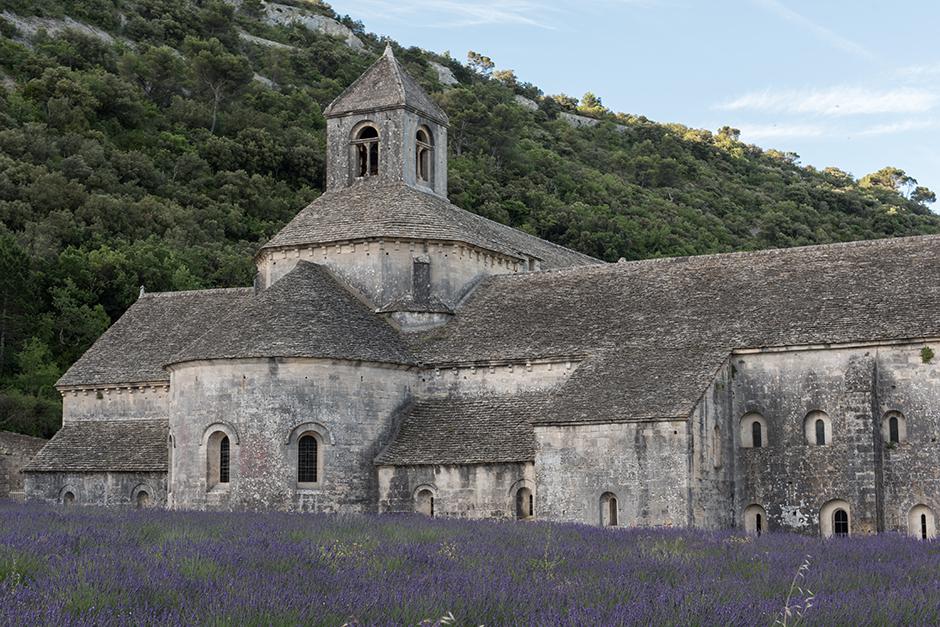 senanque-abbaye-lavande-champ2