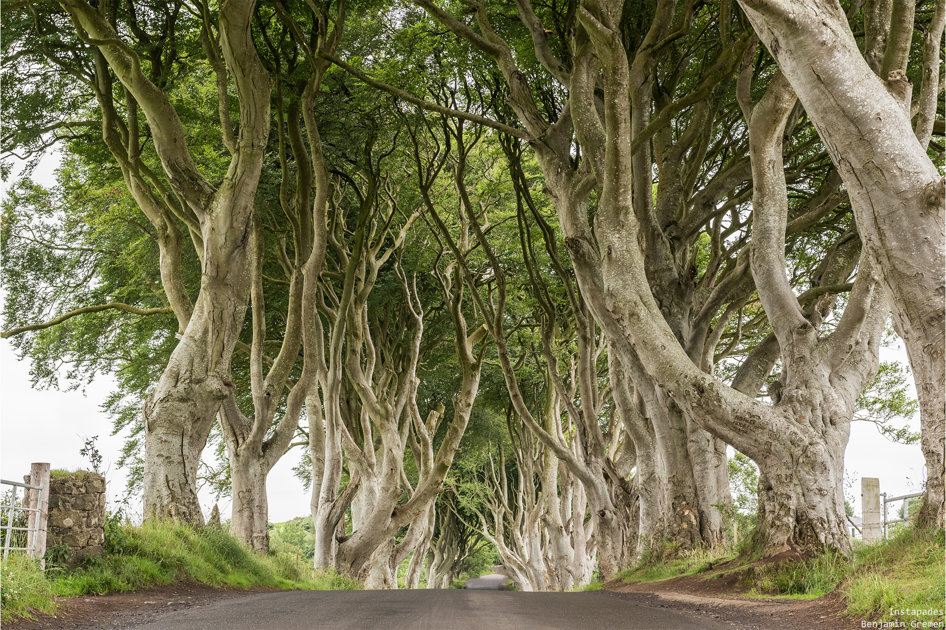 j4-dark-hedges-7283